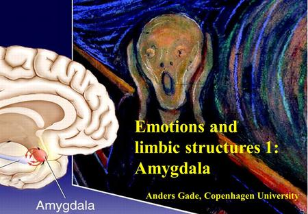 Gade Emotions and limbic structures 1: Amygdala Anders Gade, Copenhagen University.