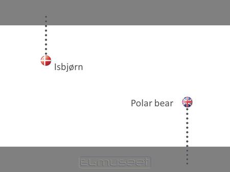 Isbjørn Polar bear.