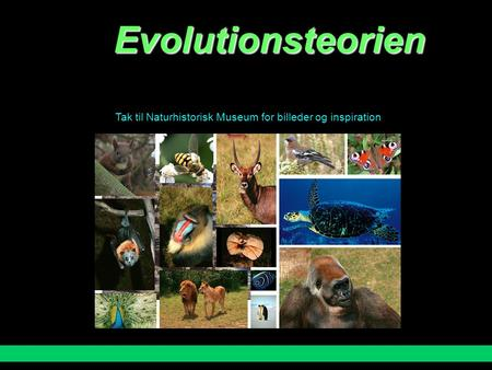 "Evolutionsteorien Tak til Naturhistorisk Museum for billeder og inspiration Charles Darwins evolutionsteori ""Survival of the fittest"" (""den bedst egnede."