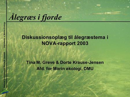 National Environmental Research Institute Department of Marine Ecology Ålegræs i fjorde Diskussionsoplæg til ålegræstema i NOVA-rapport 2003 Tina M. Greve.