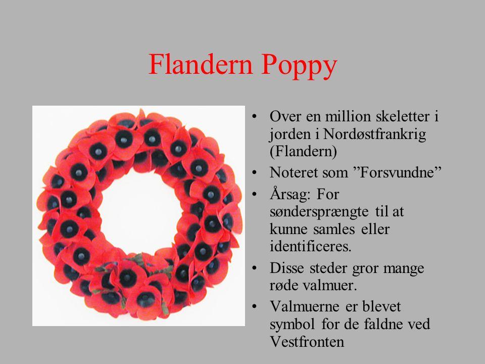 Flandern Poppy Over en million skeletter i jorden i Nordøstfrankrig (Flandern) Noteret som Forsvundne