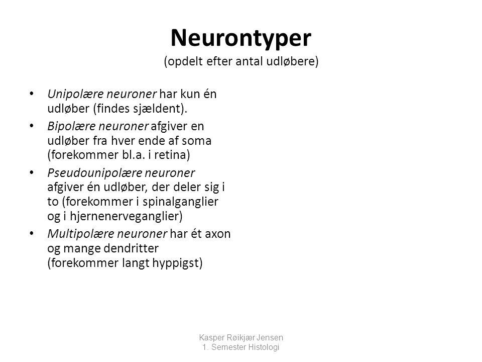 Neurontyper (opdelt efter antal udløbere)