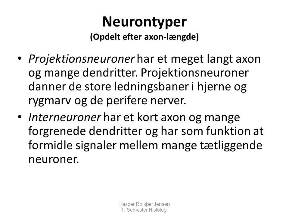 Neurontyper (Opdelt efter axon-længde)