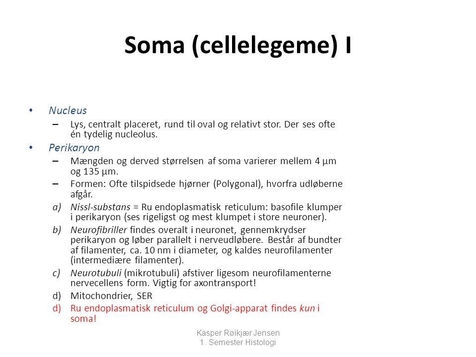 Soma (cellelegeme) I Nucleus Perikaryon