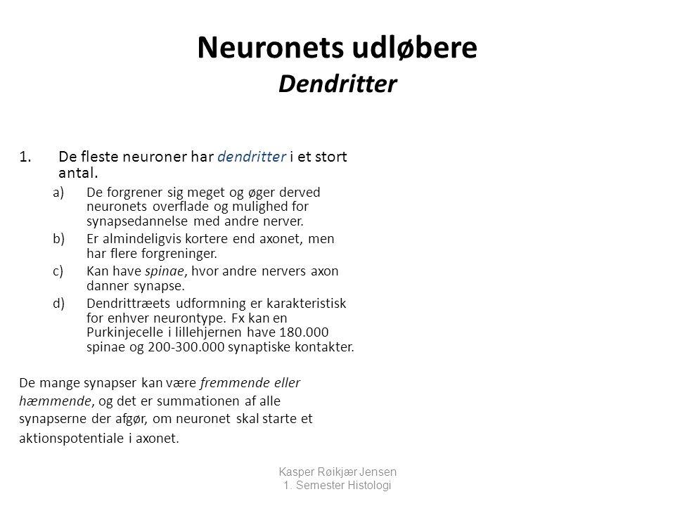Neuronets udløbere Dendritter
