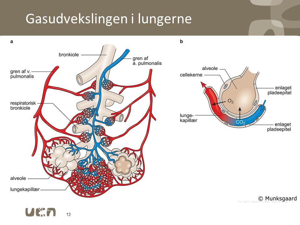 Gasudvekslingen i lungerne