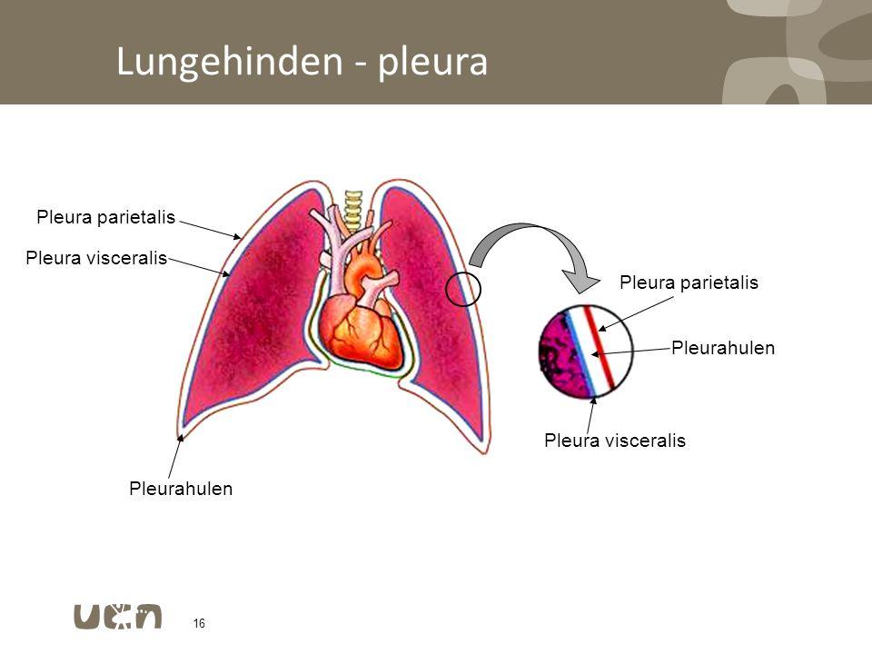 Lungehinden - pleura Pleura parietalis Pleura visceralis