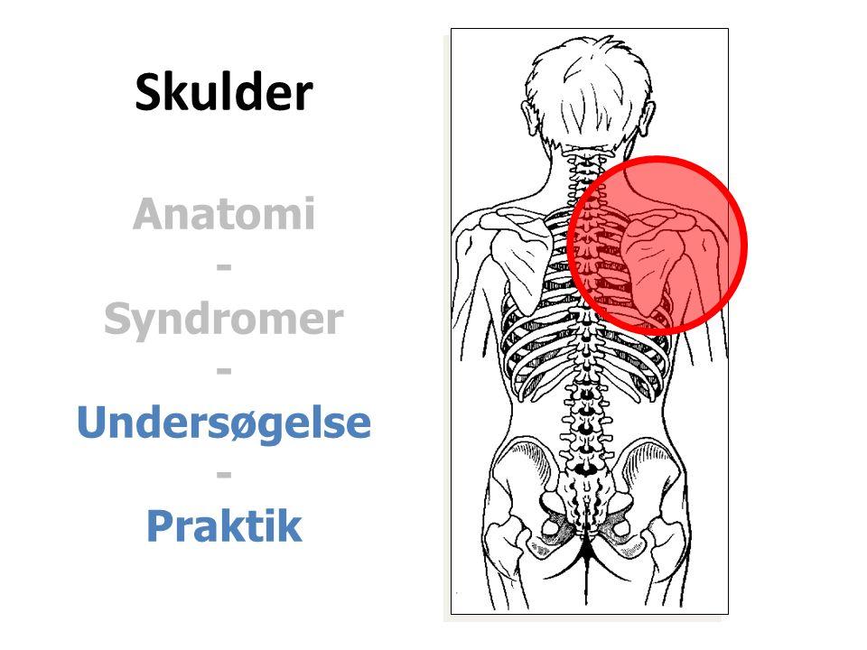 Skulder Anatomi - Syndromer - Undersøgelse - Praktik