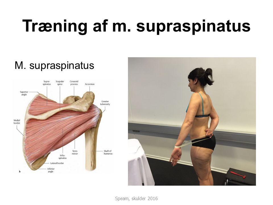 Træning af m. supraspinatus