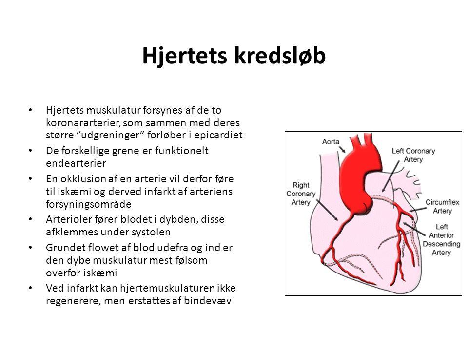 Hjertets kredsløb Hjertets muskulatur forsynes af de to koronararterier, som sammen med deres større udgreninger forløber i epicardiet.