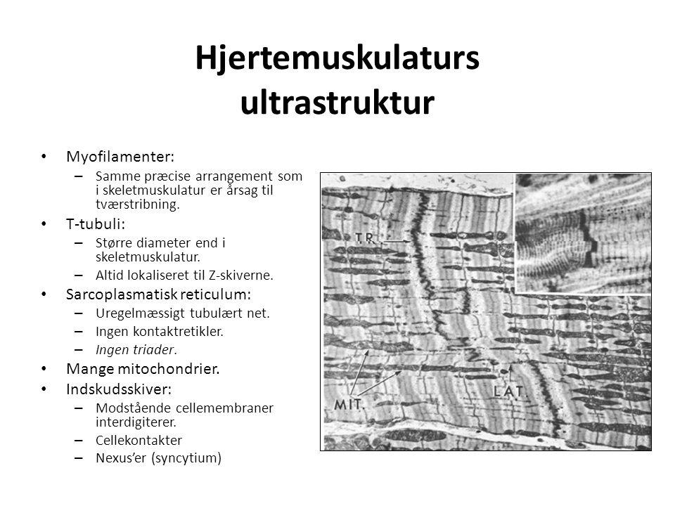 Hjertemuskulaturs ultrastruktur