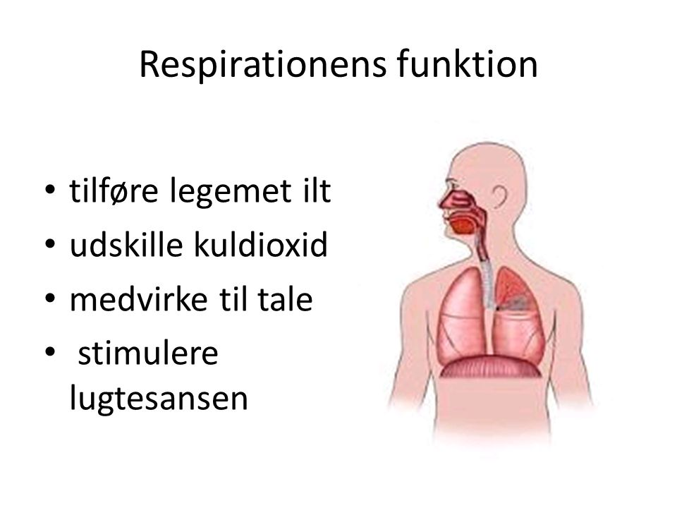 Respirationens funktion