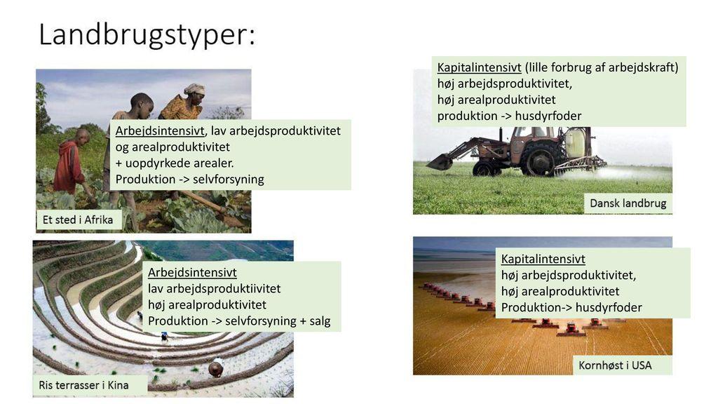 Arealproduktivitet (kg / hektar)
