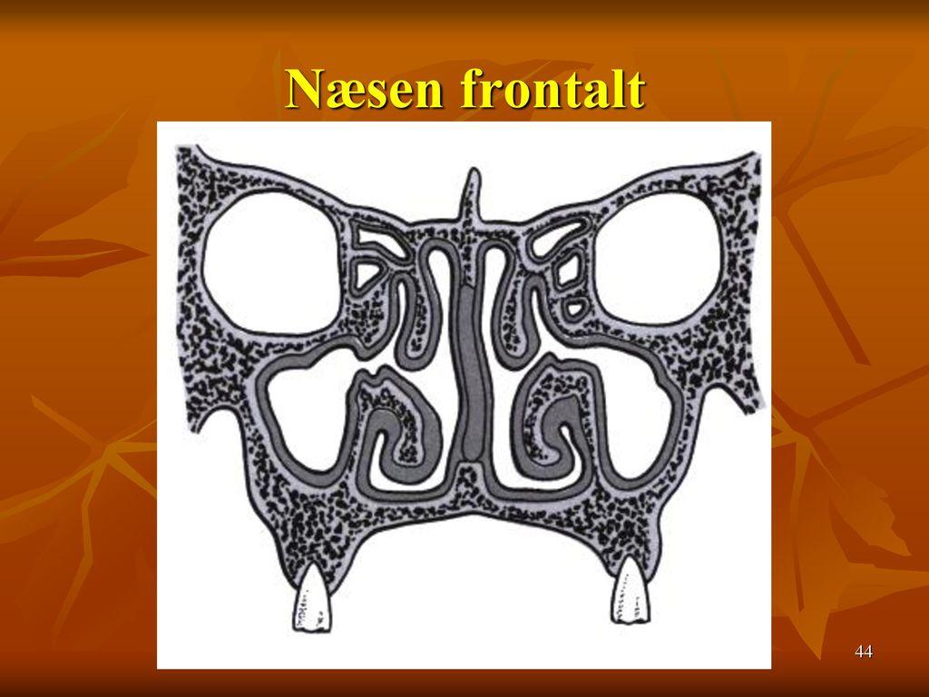 Næsen frontalt