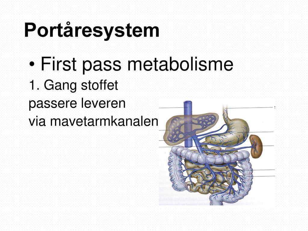 Portåresystem First pass metabolisme 1. Gang stoffet passere leveren