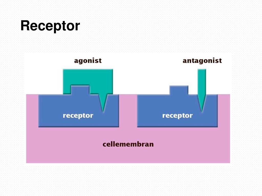 Receptor Afhængig af om lægemidlet skal hindre eller fremme en reaktion. Se næste slide.