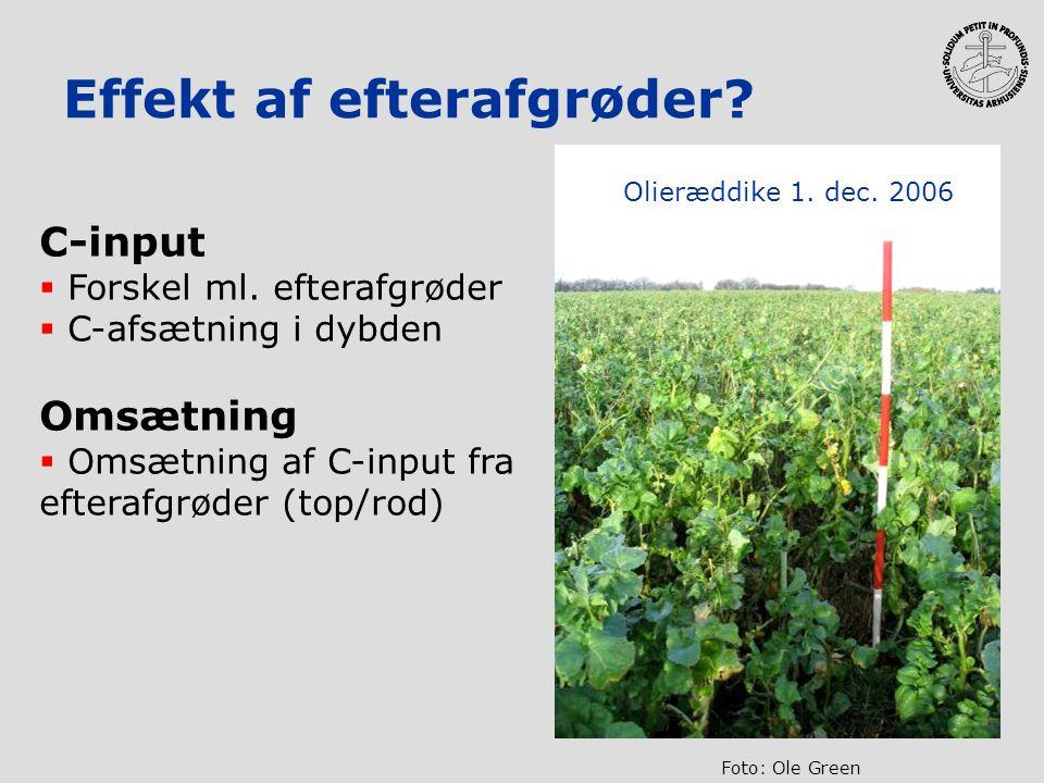 Effekt af efterafgrøder