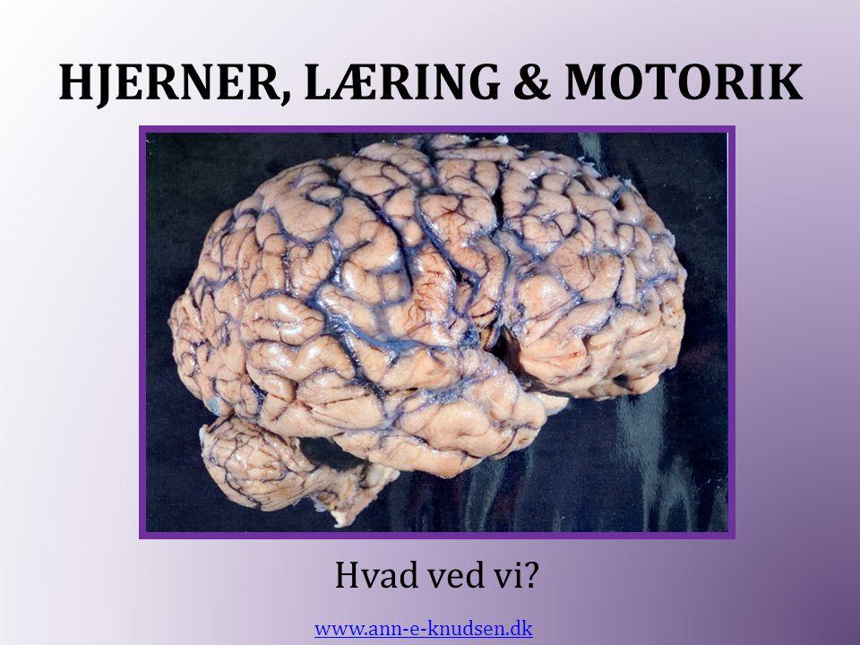 HJERNER, LÆRING & MOTORIK