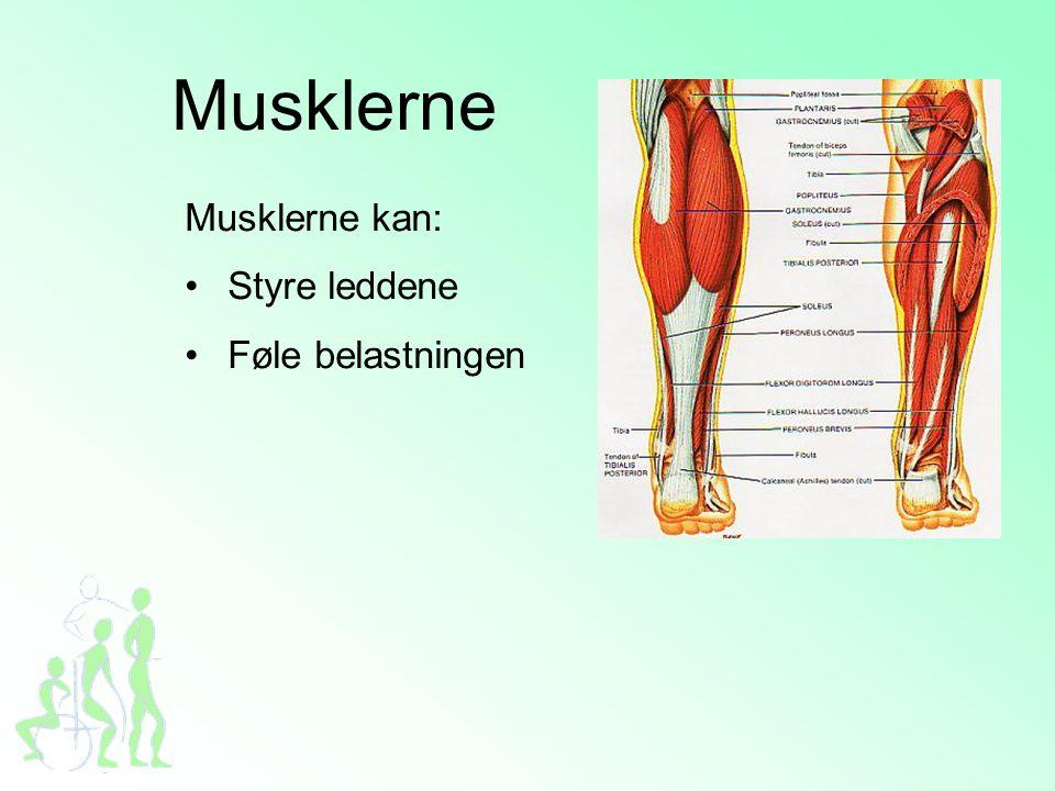 Musklerne Musklerne kan: Styre leddene Føle belastningen Dias 9