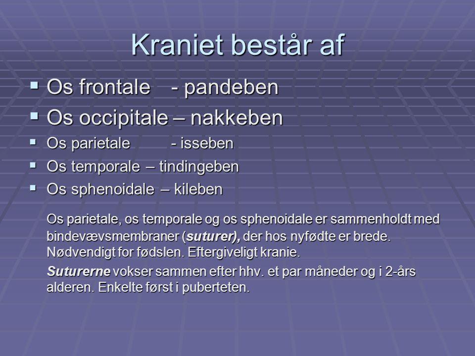 Kraniet består af Os frontale - pandeben Os occipitale – nakkeben