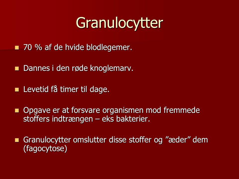 Granulocytter 70 % af de hvide blodlegemer.