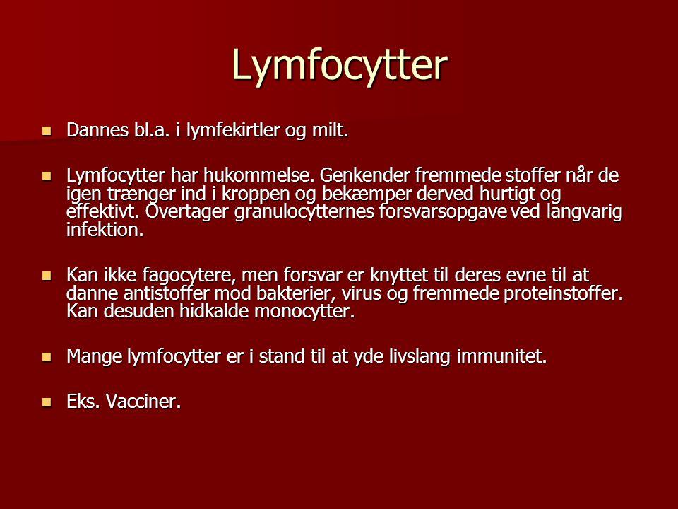 Lymfocytter Dannes bl.a. i lymfekirtler og milt.