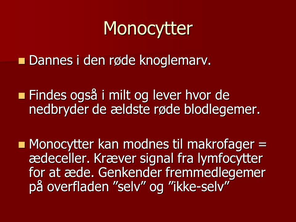 Monocytter Dannes i den røde knoglemarv.