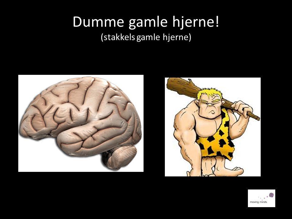 Dumme gamle hjerne! (stakkels gamle hjerne)