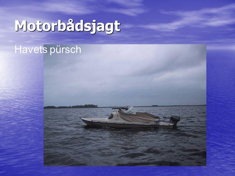 Motorbådsjagt Havets pürsch