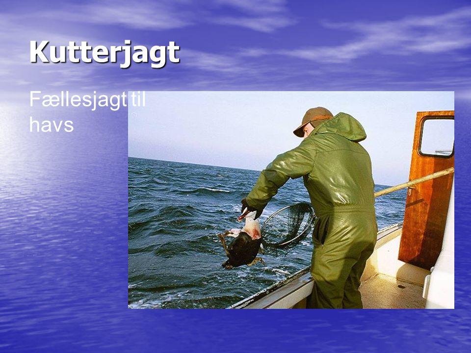 Kutterjagt Fællesjagt til havs