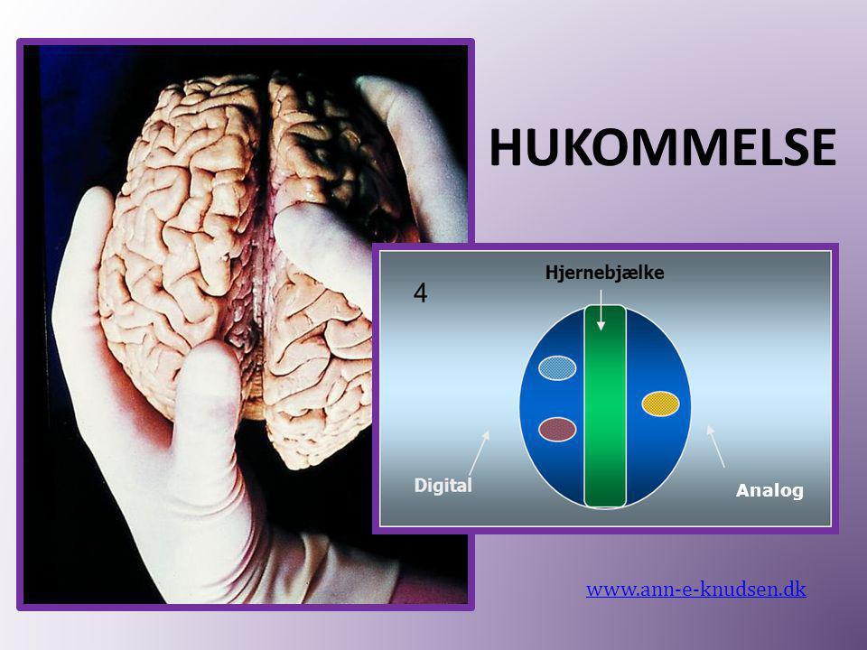 HUKOMMELSE Analog www.ann-e-knudsen.dk