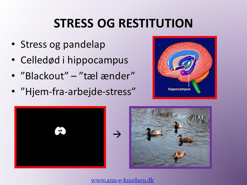 STRESS OG RESTITUTION Stress og pandelap Celledød i hippocampus
