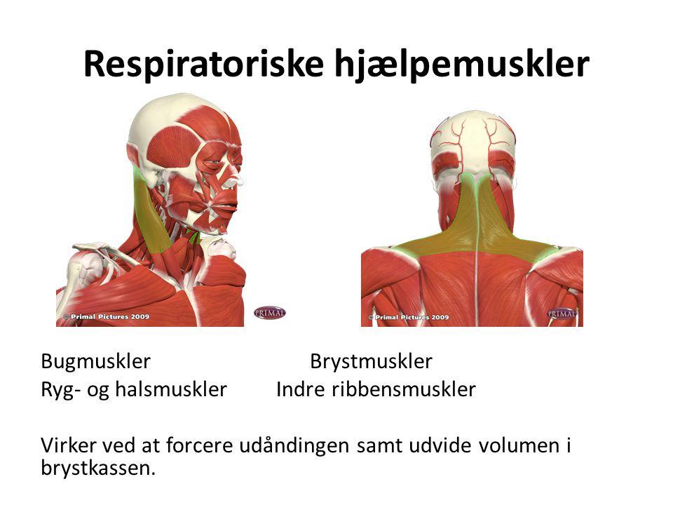 Respiratoriske hjælpemuskler