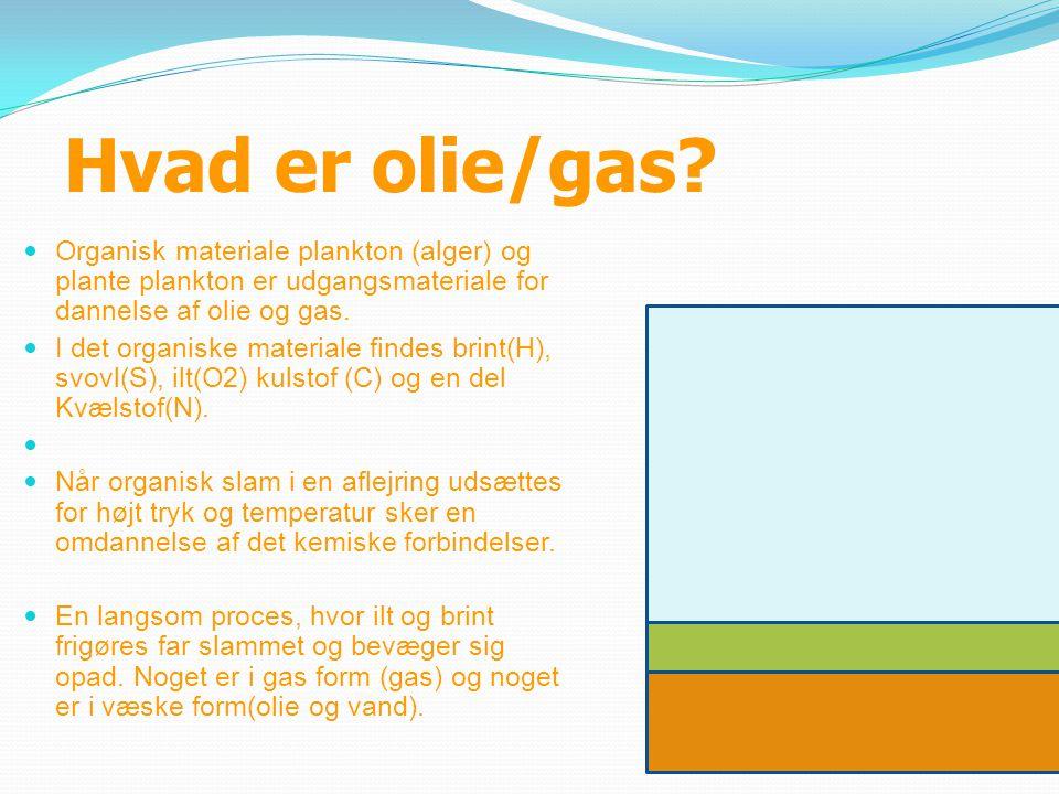 Hvad er olie/gas Organisk materiale plankton (alger) og plante plankton er udgangsmateriale for dannelse af olie og gas.