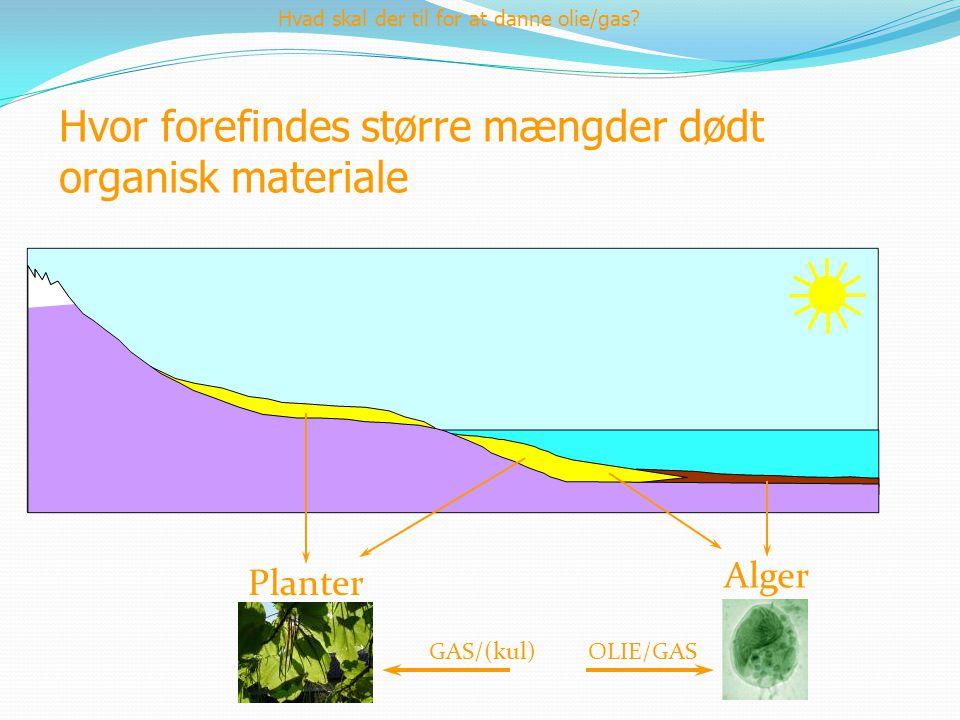 Hvor forefindes større mængder dødt organisk materiale