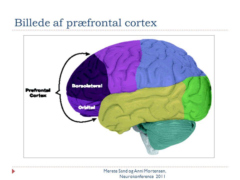 Billede af præfrontal cortex