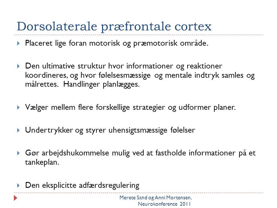 Dorsolaterale præfrontale cortex