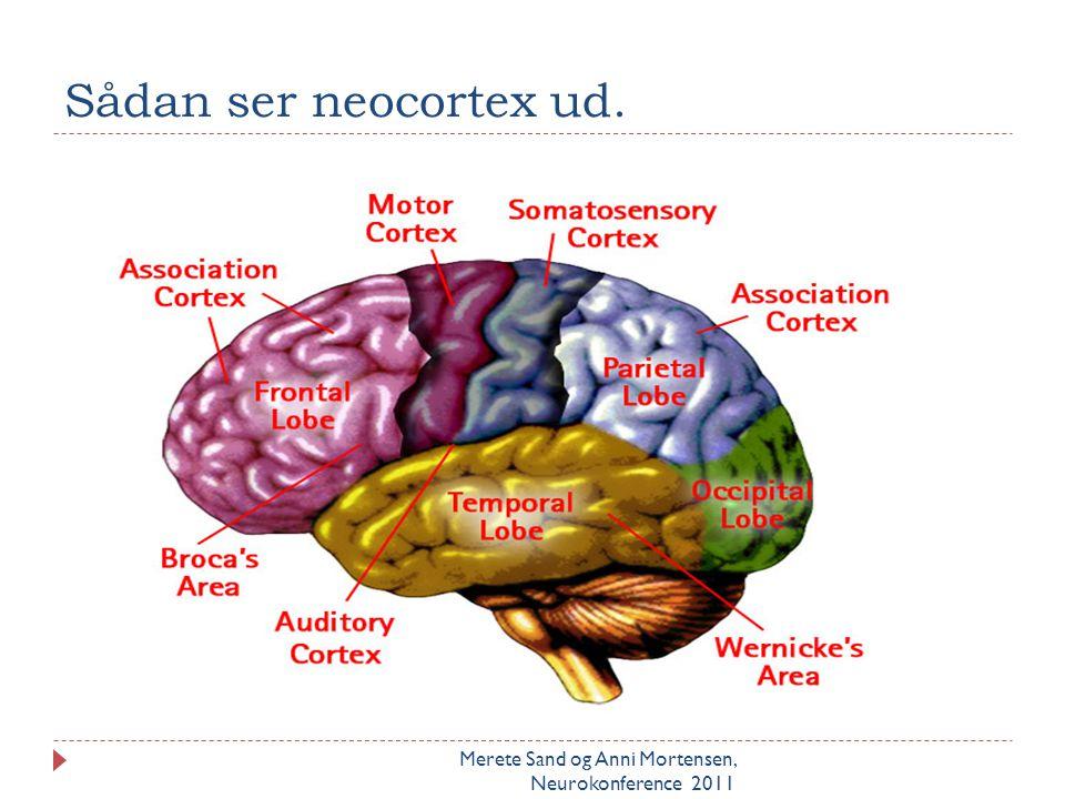 Sådan ser neocortex ud. Husk at nævne INSULA som den 5. lap. Og gyrus singularis som ligger som en vinding over corpus callosum.
