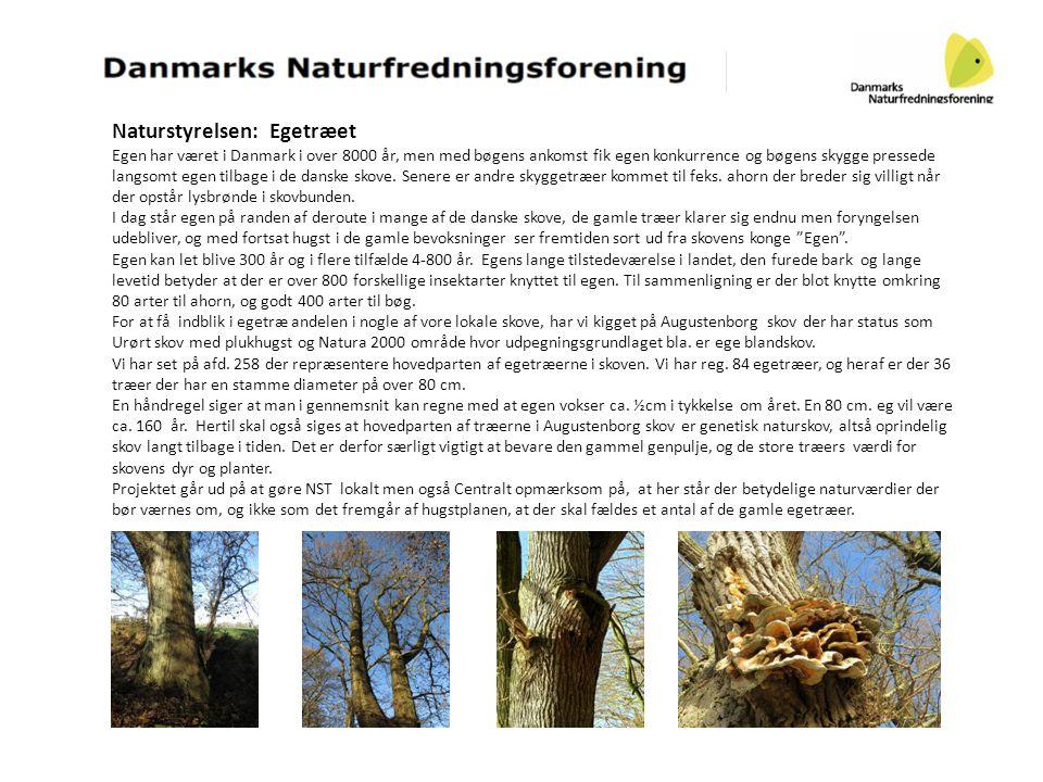 Naturstyrelsen: Egetræet