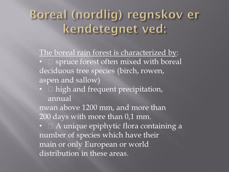 Boreal (nordlig) regnskov er kendetegnet ved: