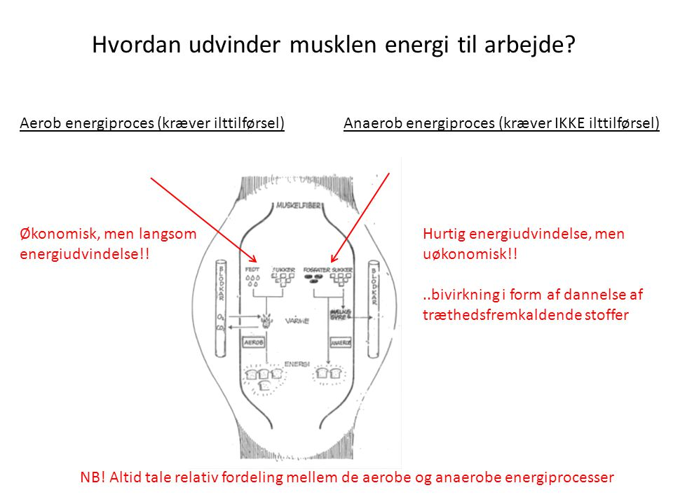 Hvordan udvinder musklen energi til arbejde
