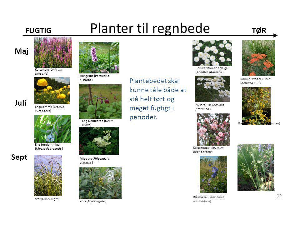 Planter til regnbede FUGTIG TØR Maj Juli Sept