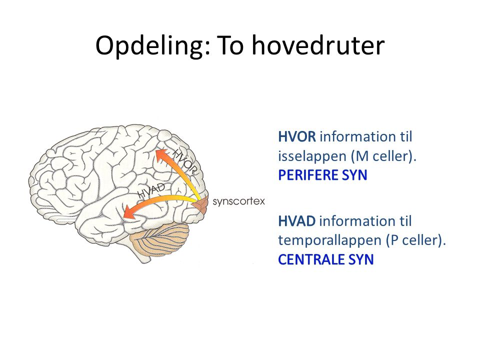 Opdeling: To hovedruter