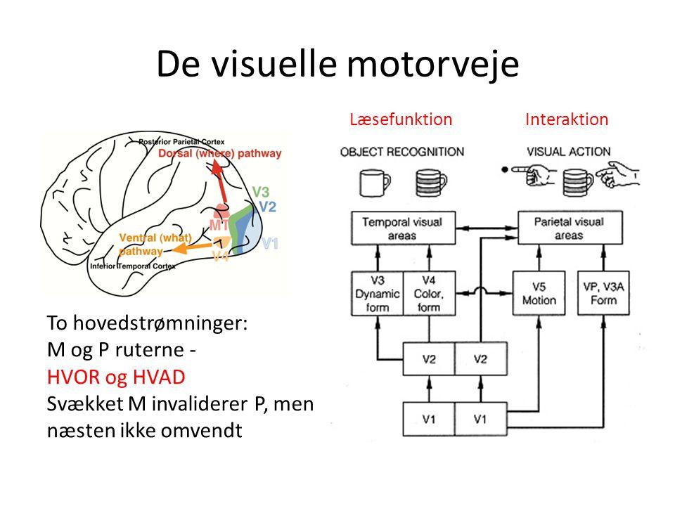 De visuelle motorveje To hovedstrømninger: M og P ruterne -