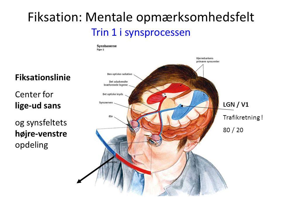 Fiksation: Mentale opmærksomhedsfelt Trin 1 i synsprocessen