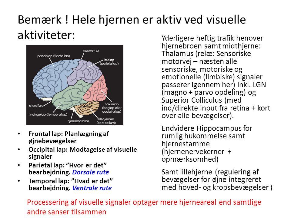 Bemærk ! Hele hjernen er aktiv ved visuelle aktiviteter: