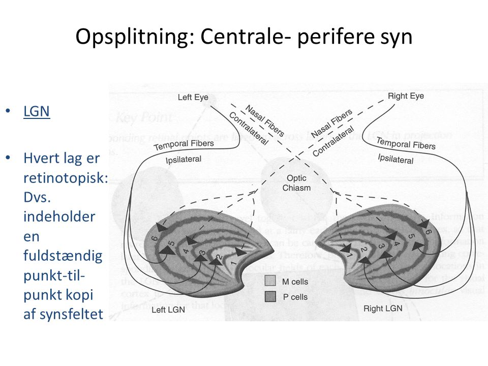 Opsplitning: Centrale- perifere syn