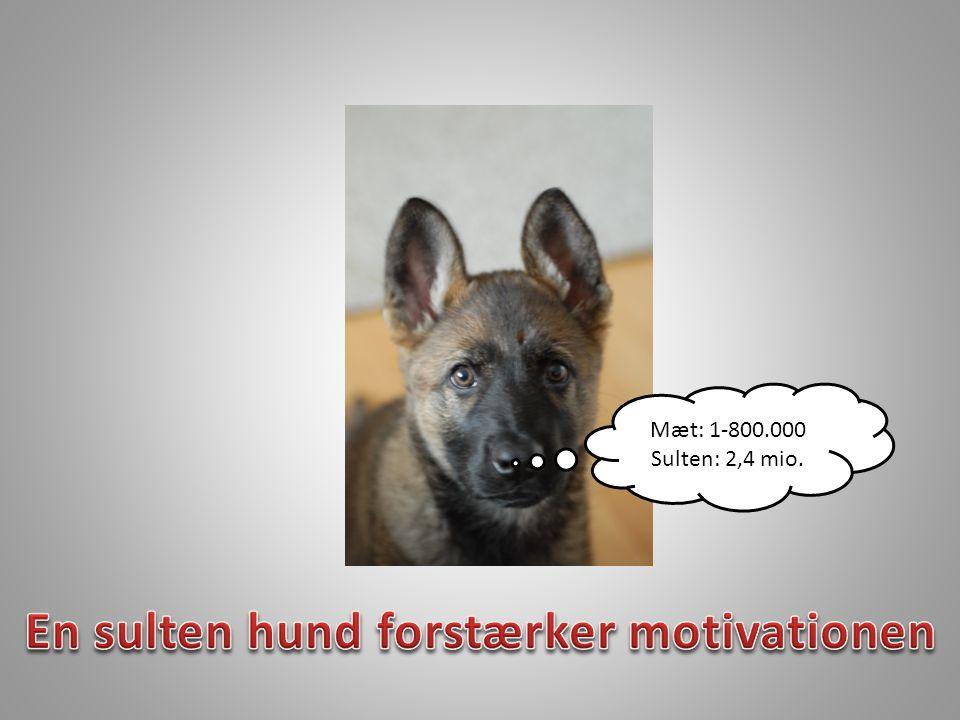 En sulten hund forstærker motivationen