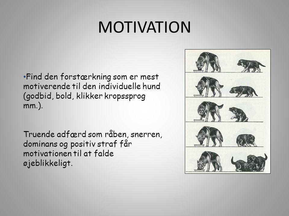 MOTIVATION Find den forstærkning som er mest motiverende til den individuelle hund (godbid, bold, klikker kropssprog mm.).