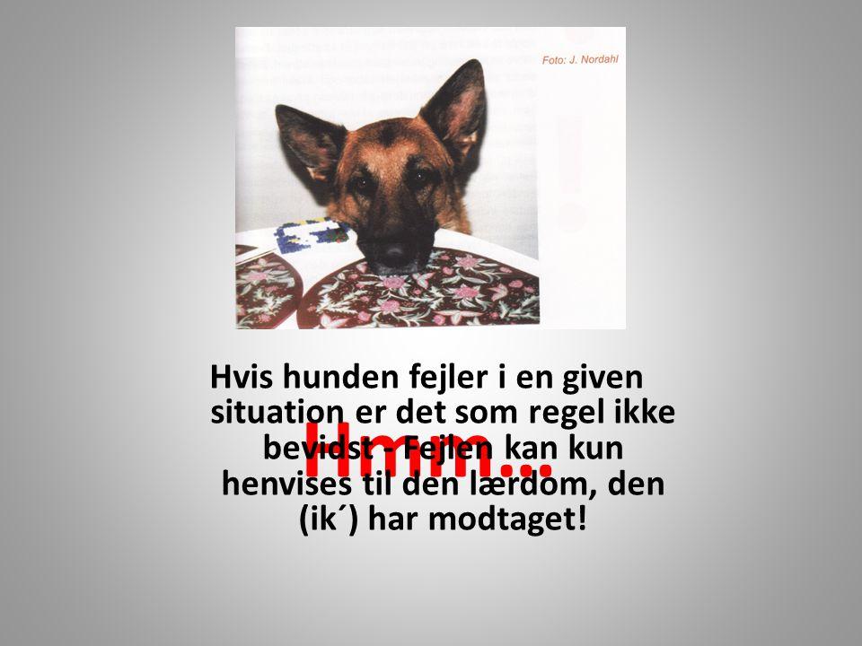 Hvis hunden fejler i en given situation er det som regel ikke bevidst - Fejlen kan kun henvises til den lærdom, den (ik´) har modtaget!